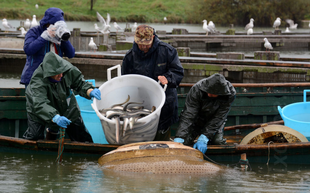 2018 – Traditional fishing and eel conservation in the European Biosphere Reserves